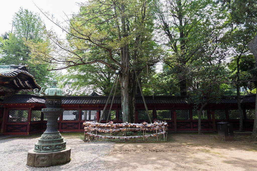 "Do Not Miss the ""Prayer Tree of Kaya"", Famous for Love Blessings!"