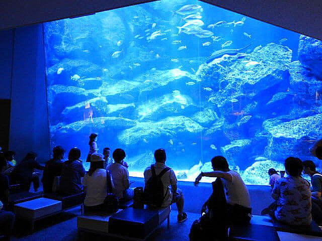 About the Sumida Aquarium