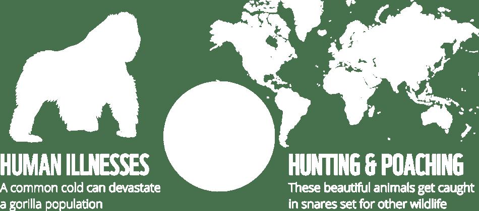 WWF design details