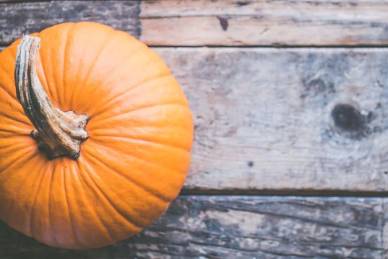 Flutur pumpkin