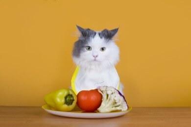 Flutur cat veggies