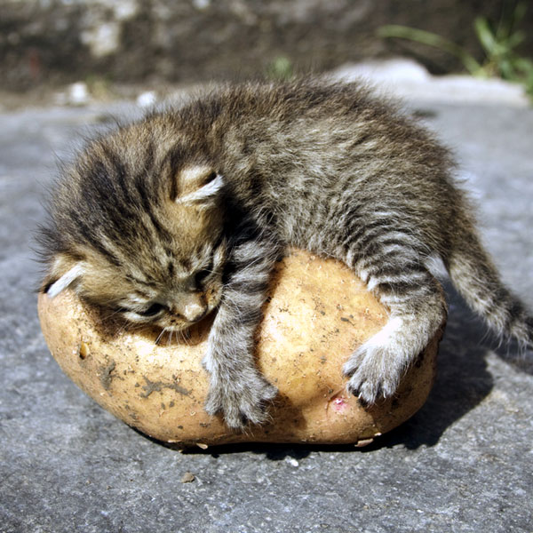 9 Affordable Meals For Stray Cats In India