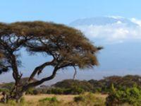 Masai Mara .