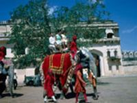 Elephant ride in Amer Fort