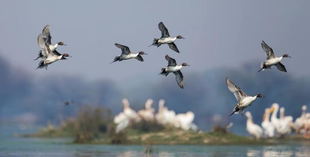 Bharatpur bird sanctuary_alt