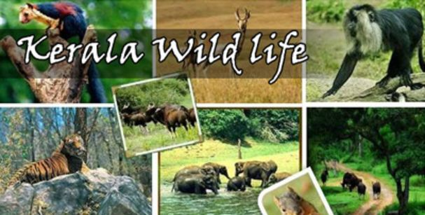 kerala_wildlife_tour_alt