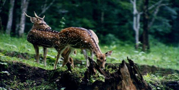 begur_wildlife_sanctury_alt