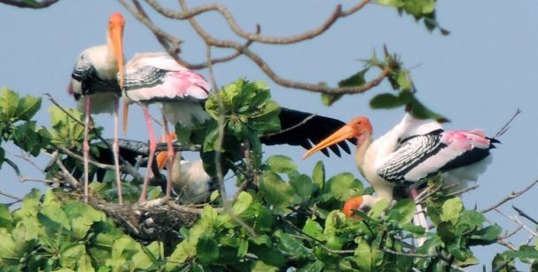 bird_watching_tour_in_kerala_alt
