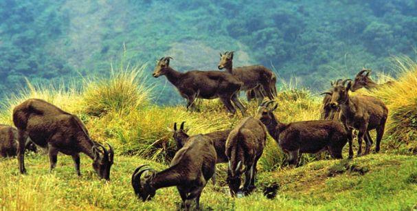 chinnar_wildlife_sanctuary_alt