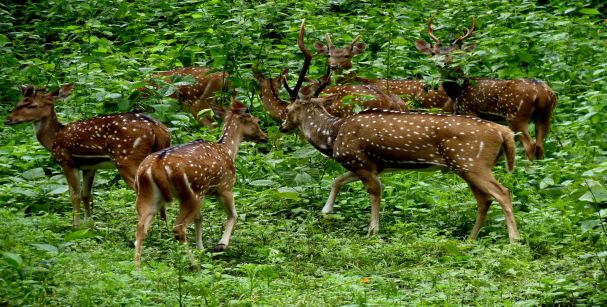 idukki_wildlife_sanctuary_alt