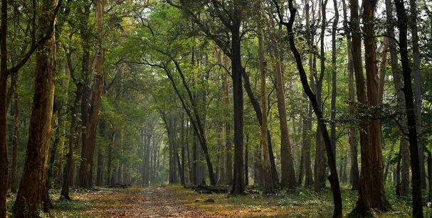 Kerala_wildlife_reserve_alt