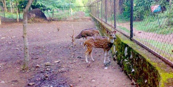 NEYYAR_WILDLIFE_SANCTUARY_alt