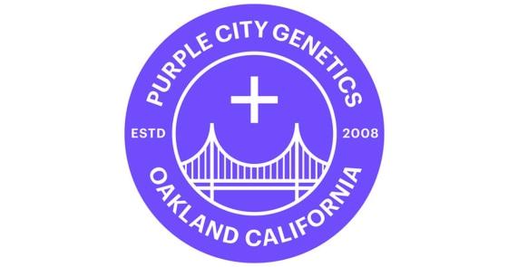 Purple City Genetics - 14 Bombers - Seedling