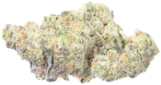Sessions Supply Co. - Belato - 3.5g