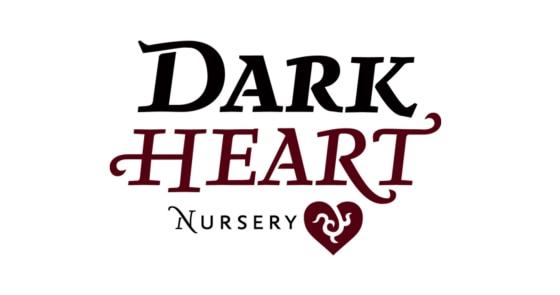 Dark Heart Nursery - Bling Heartlet - Plant