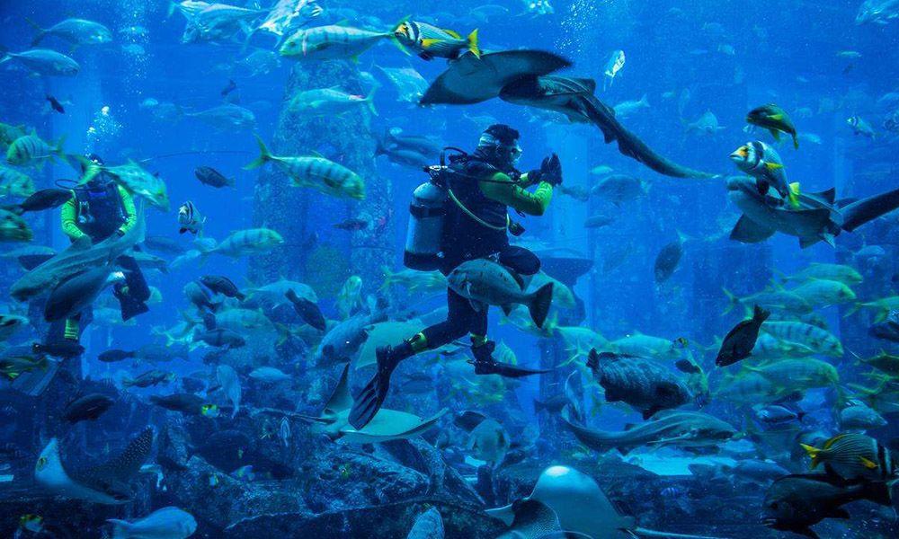 Dubai Mall Aquarium & Under Water Zoo