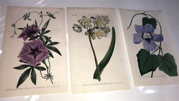 Rare antique bird lithographs and engravings from centuries ago by Selby, Edwards and Bolton.