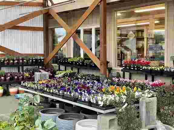 Offering an expansive inventory of seasonal annuals and perennials. Some of our winter favorites include pansies, primroses, hellebores, fragrant Daphne and Sarcococca. We have a beautiful undercover awning to help you stay protected from the elements whe