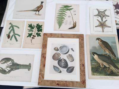 Shop at Anne Hall Antique Prints online this year and shop in person at NWFGS 2022.