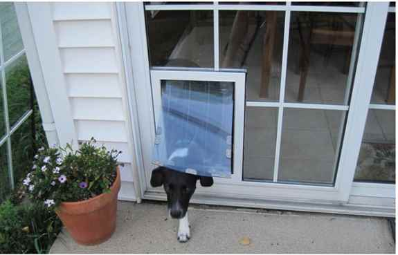 Beautiful in glass pet doors. Let your dog go outside anytime he needs to.
