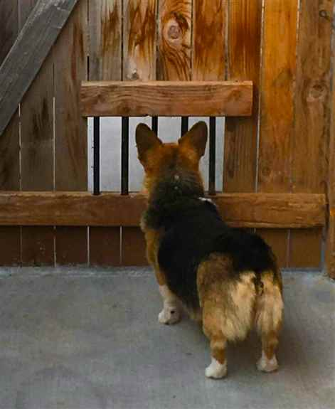 Our Doggie Windows are a huge hit among humans and doggos! We fully customize these lookouts for your furry friends so they fit seamlessly into your fence design.