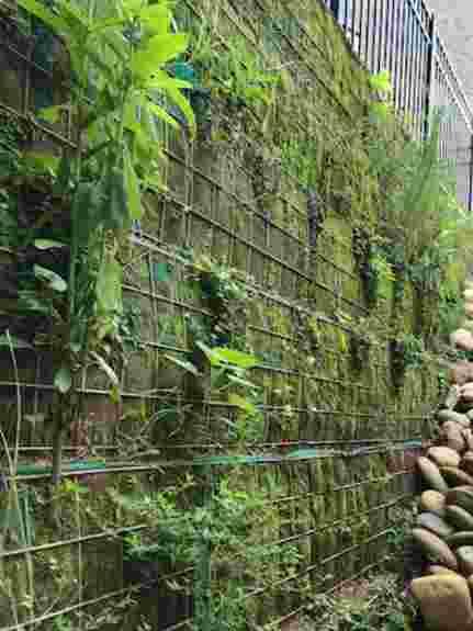 Soil Basket/ Living Retaining Wall