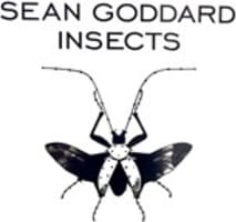 Sean Goddard Insects Gallery