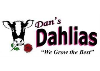 Dan's Dahlias