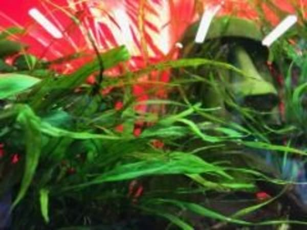 You don't need animals to grow aquatic plants.