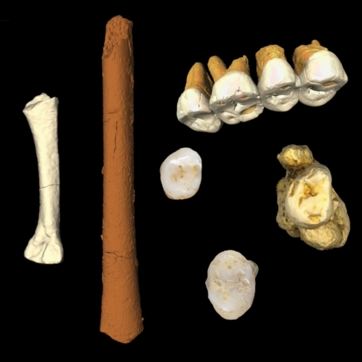 Resultado de imagem para homo luzonensis
