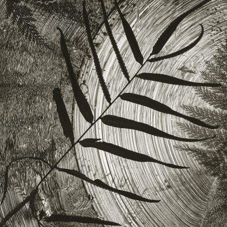 Abelardo Morell's Water / Fern / Ink