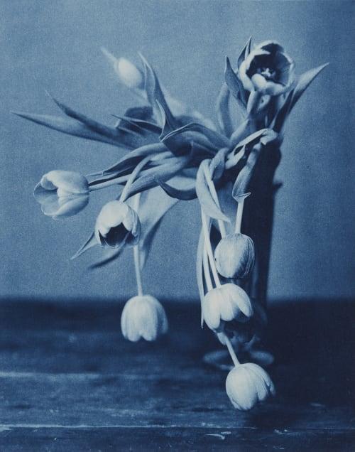 Mourning Tulips Dugdale, John  (American, b.1960)