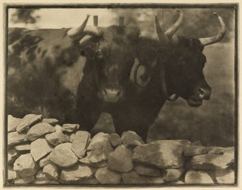 My Neighbors Kasebier, Gertrude  (American, 1852-1934)