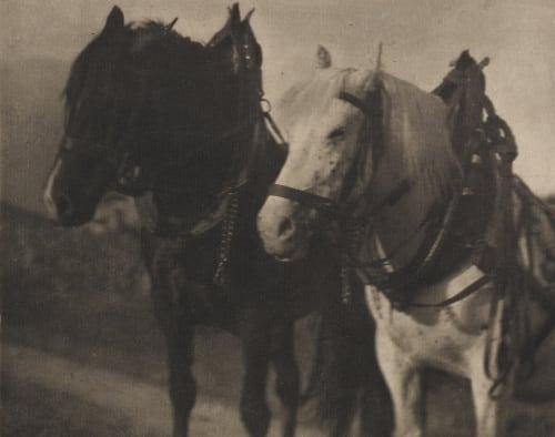 Horses Stieglitz, Alfred  (American, 1864-1946)