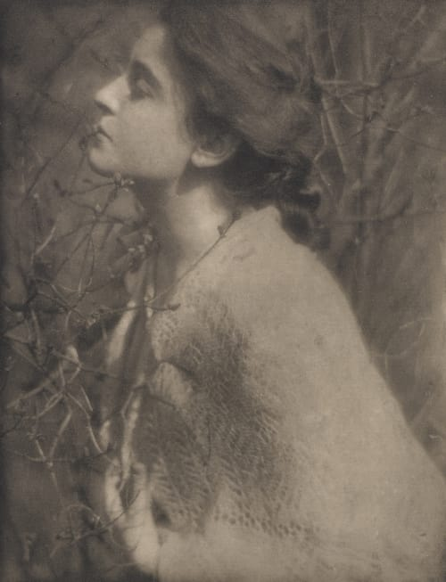 Lilac Buds; Mrs. S. Steichen, Edward  (American, 1879-1973)