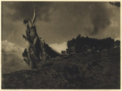Soul of the Blasted Pine Brigman, Annie A.  (American, 1869-1950)