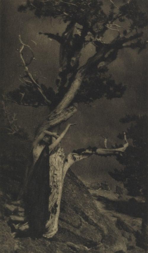 The Dying Cedar Brigman, Annie A.  (American, 1869-1950)