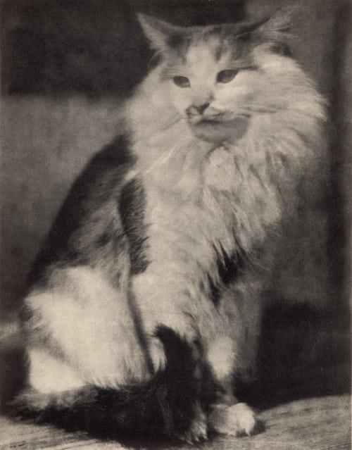 The Cat Herth, Anna  (German, 1865-1936)