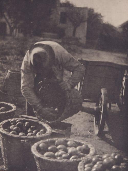 Fruits of the Earth Kasebier, Gertrude  (American, 1852-1927)