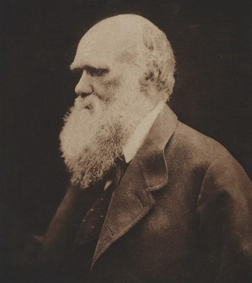 Charles Darwin Cameron, Julia Margaret  (British, 1815-1879)