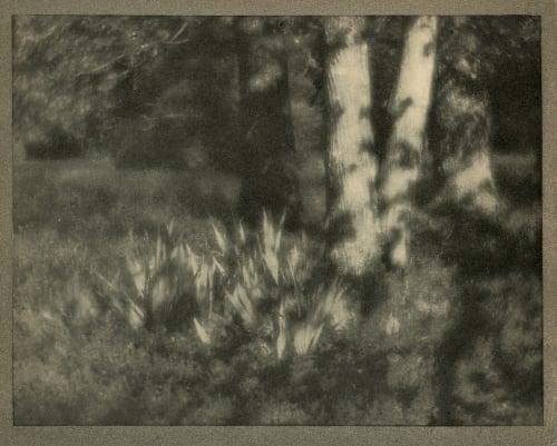 The Garden by Moonlight Coburn, Alvin Langdon  (American, 1882-1966)