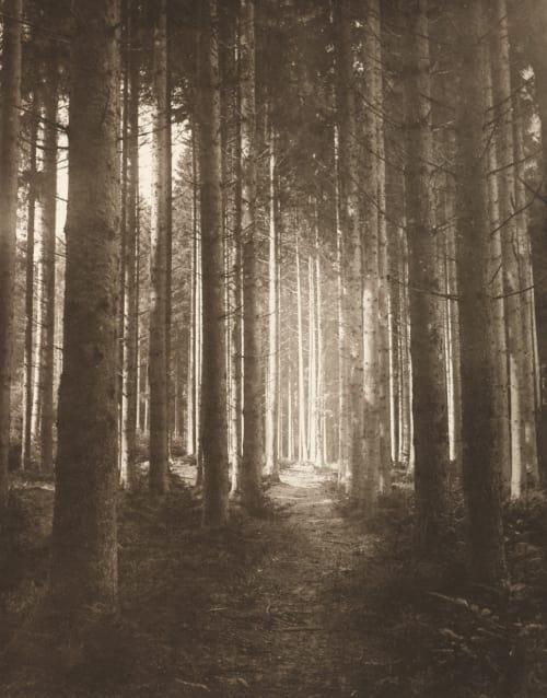 Waldlichtung Hannon, Edouard  (Belgian, 1853-1931)