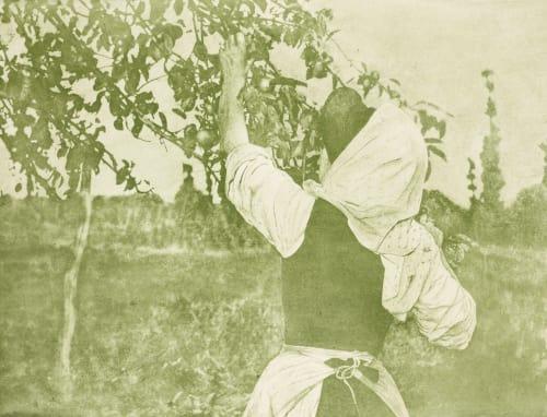 """Apfelernte """"Apple Harvest """" Hofmeister, Theodor   (German, 1868-1943)Hofmeister, Oscar  (German, 1871-1957)"""