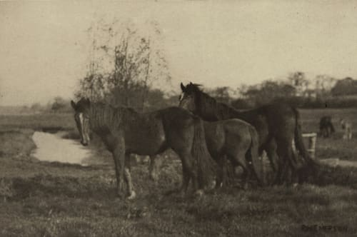 Colts on a Norfolk Marsh Emerson, Peter Henry  (British, 1856-1936)