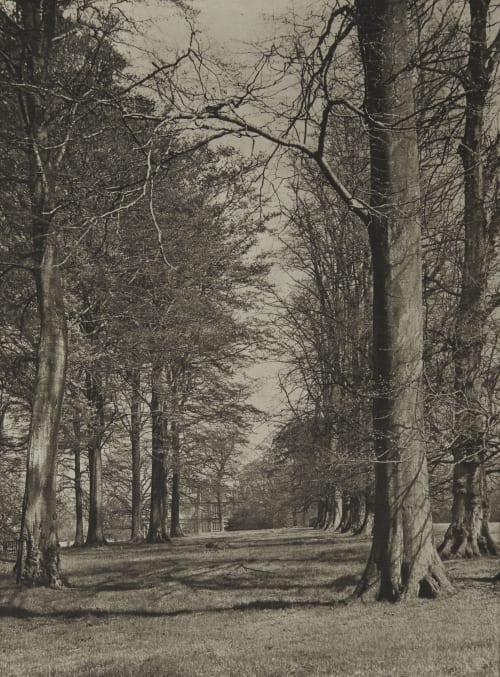 Avenue of the Trees Annan, James Craig  (Scottish, 1864-1946)