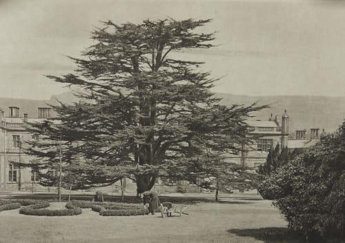 The Cedar Tree Annan, James Craig  (Scottish, 1864-1946)