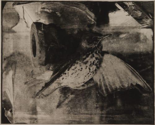 Untitled Faure, Hendrik 1951  (b.German)