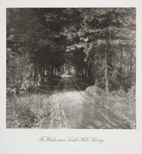 Fir Woods, near Leith Hill Surrey Evans, Fredrick  (British, 1853-1943)