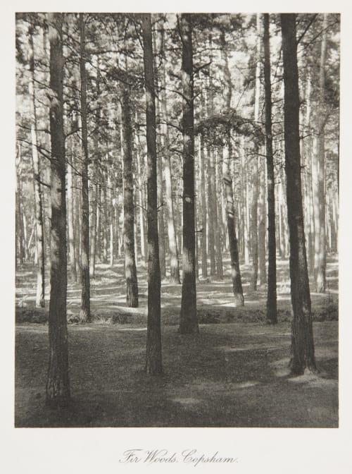 The Woods Copsham Evans, Fredrick  (British, 1853-1943)