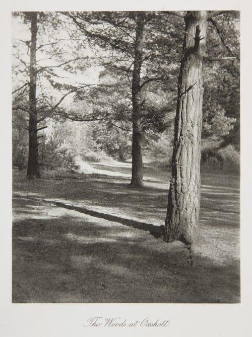 The Woods at Oxshott Evans, Fredrick  (British, 1853-1943)